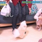 【画像】元乃木坂の斉藤優里さんのパンチラがエッチすぎてビッチ臭がヤバイwwwwwwwwwww